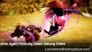 Jenis Ayam Petarung Dalam Sabung Online